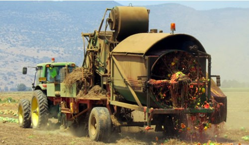 Watermelon De-seeder  (Israel)